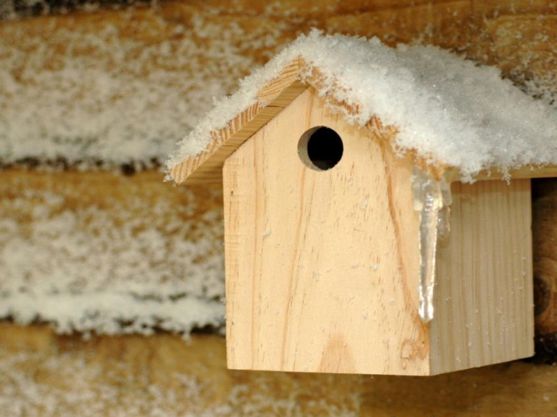 Birds house Dressed with display snow