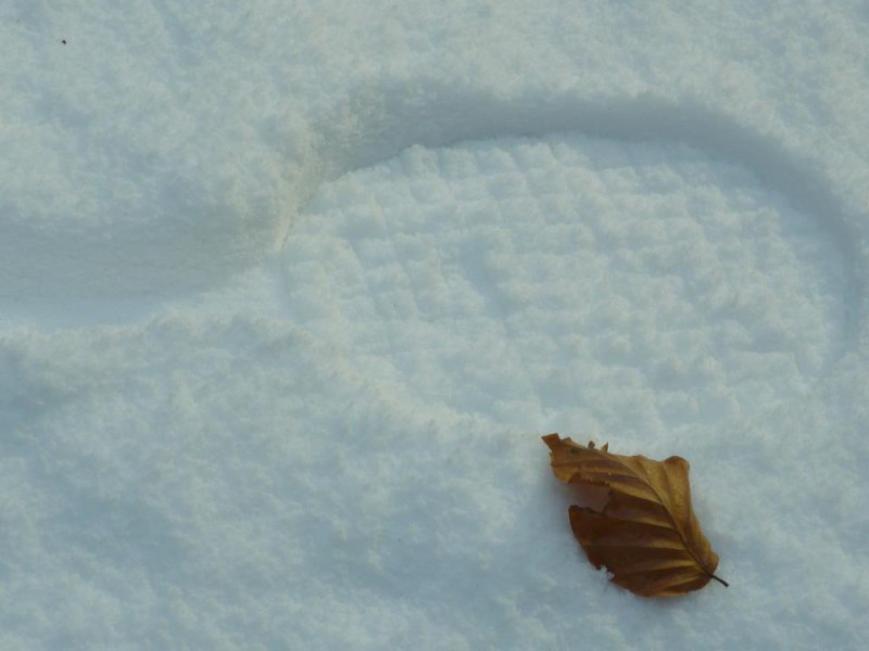Snow print with leaf