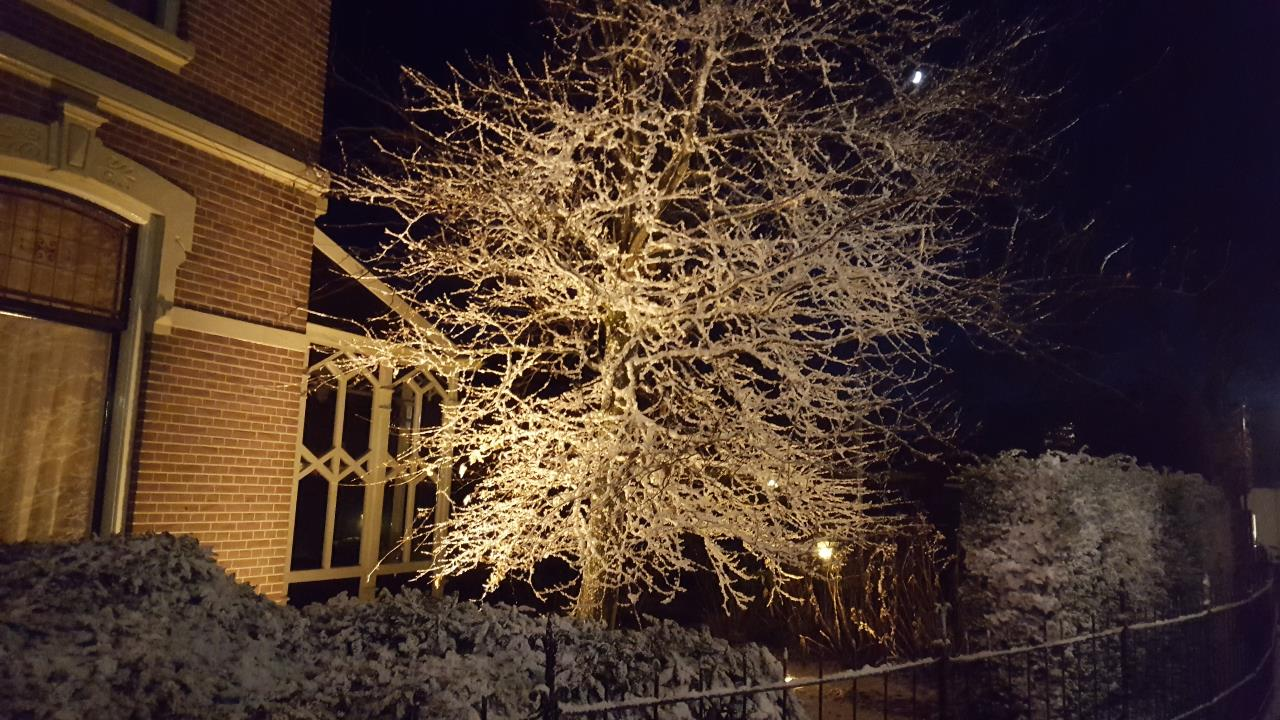 snowy tree at night