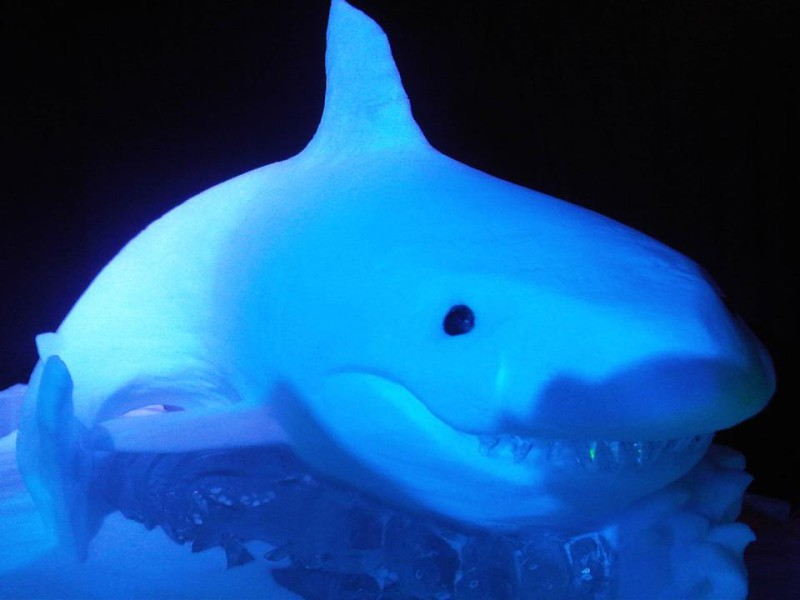 Shark made from snow