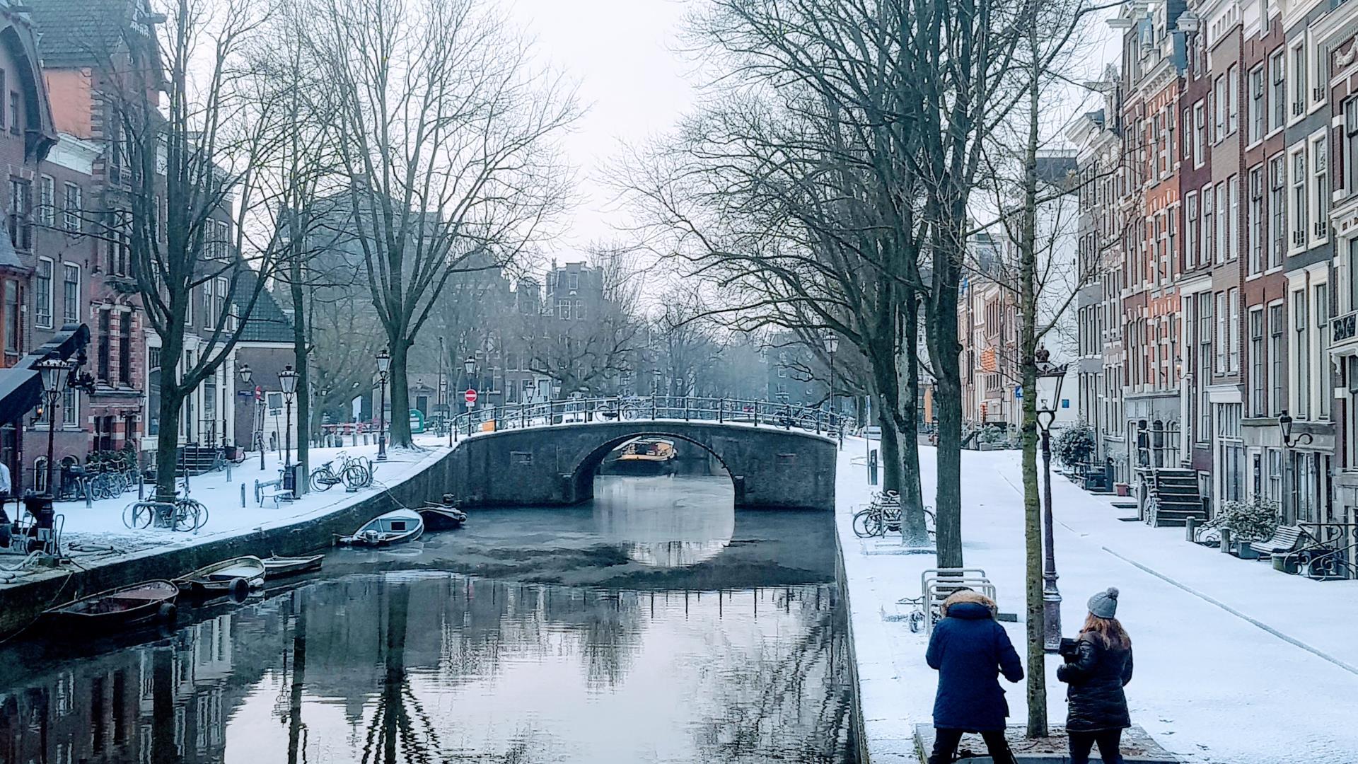 papier sneeuw op straat in Amsterdam, Goldfinch